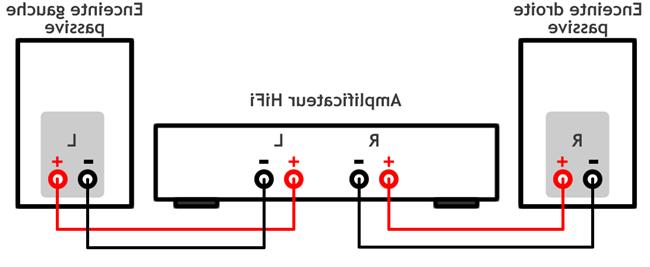 Comment brancher un cable speakon ?